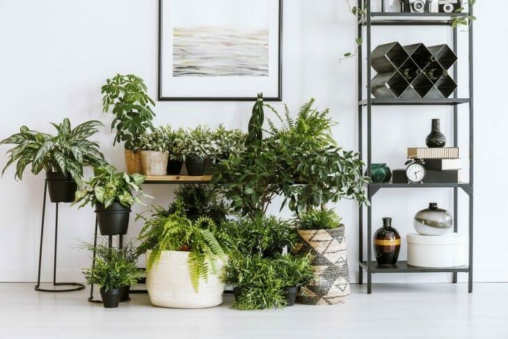 rośliny oczyszczające powietrze na białej ścianie