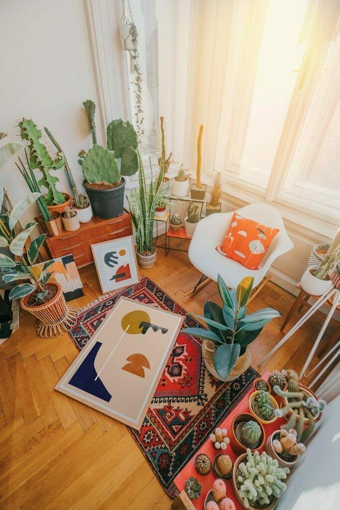 urban jungle w salonie teniczny dywan kolorowe grafiki w ramkach biały nowoczesny fotel rośliny doniczkowe kaktusy i pouncja