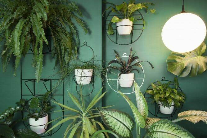 Rośliny Oczyszczające Powietrze Top5 Rośliny W Sypialni