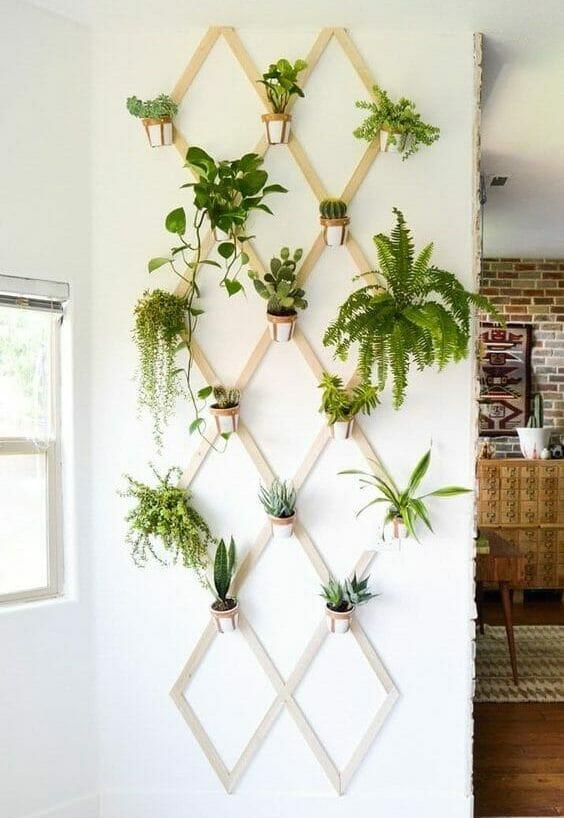 rośliny oczyszczające powietrze paprotka