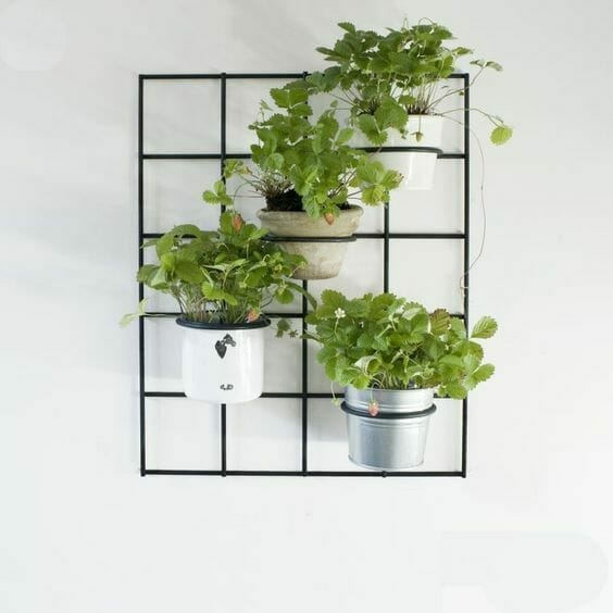 ogródek ziołowy w kuchni zioła w kuchni