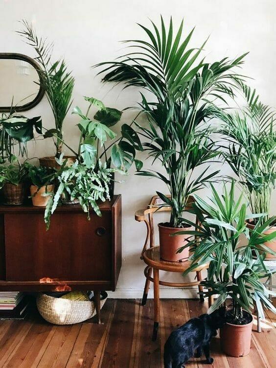 urban jungle rośliny palmy w doniczkach na kredensie vintage