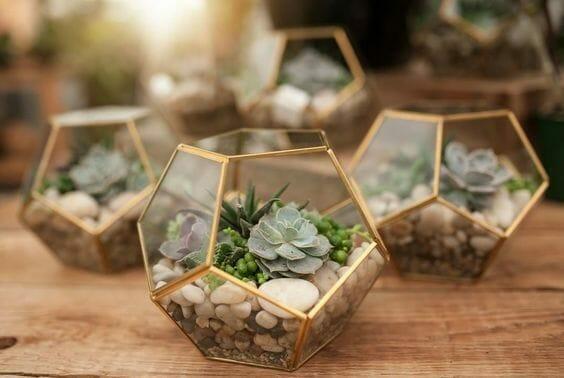 roślinki w szklanych