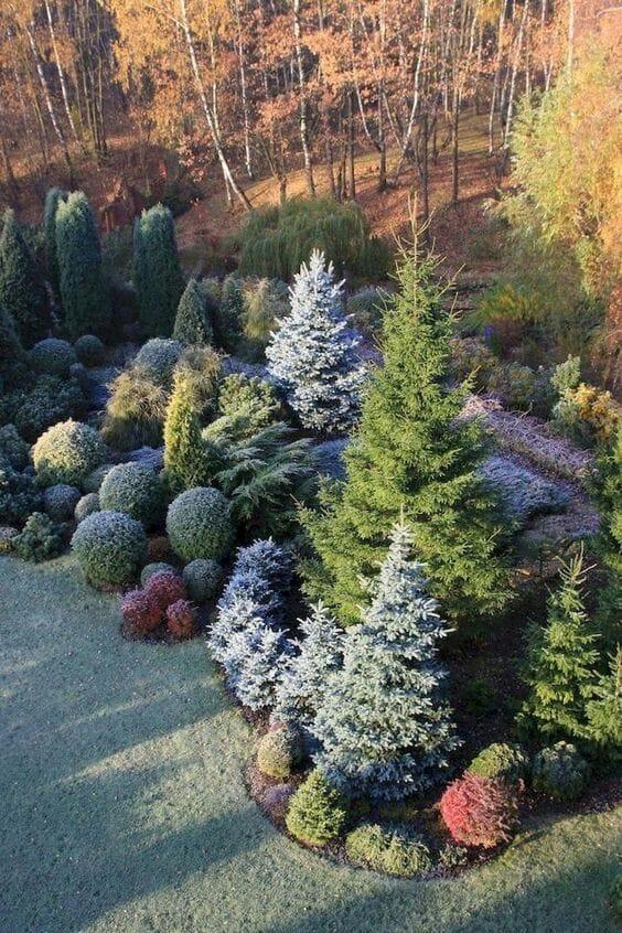 iglaki w ogrodzie projekt