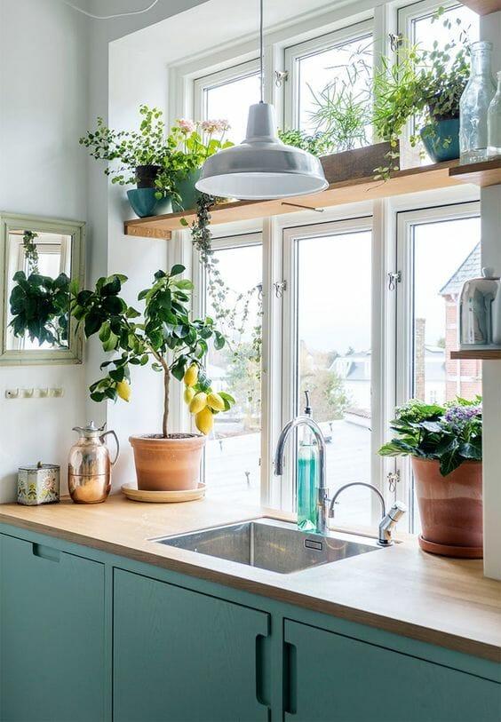 modna kuchnia w kolorze niebieskim drzewko cytrynowe