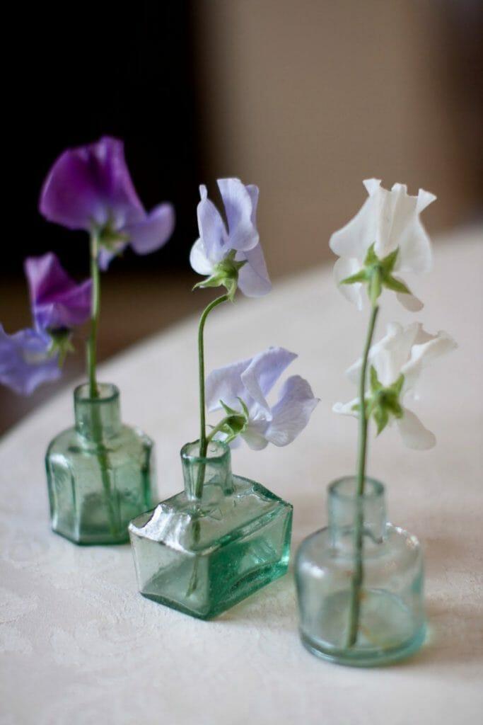 aranżacja z trzech pojdeynczych kwiatów pachnącego groszku w trzech butelkach