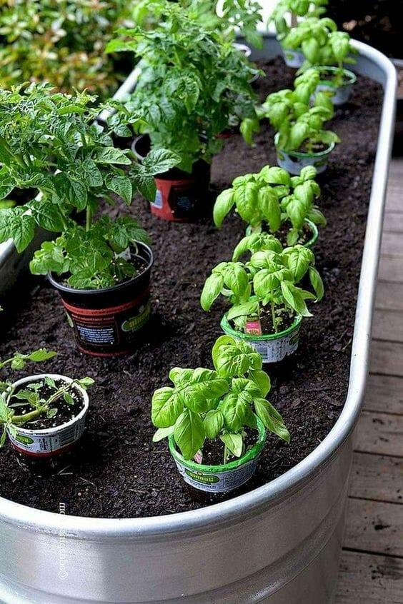 zioła w kuchni i w ogrodzie