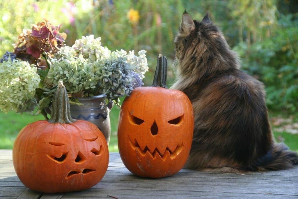 Ozdoby na Halloween - DIY dynie