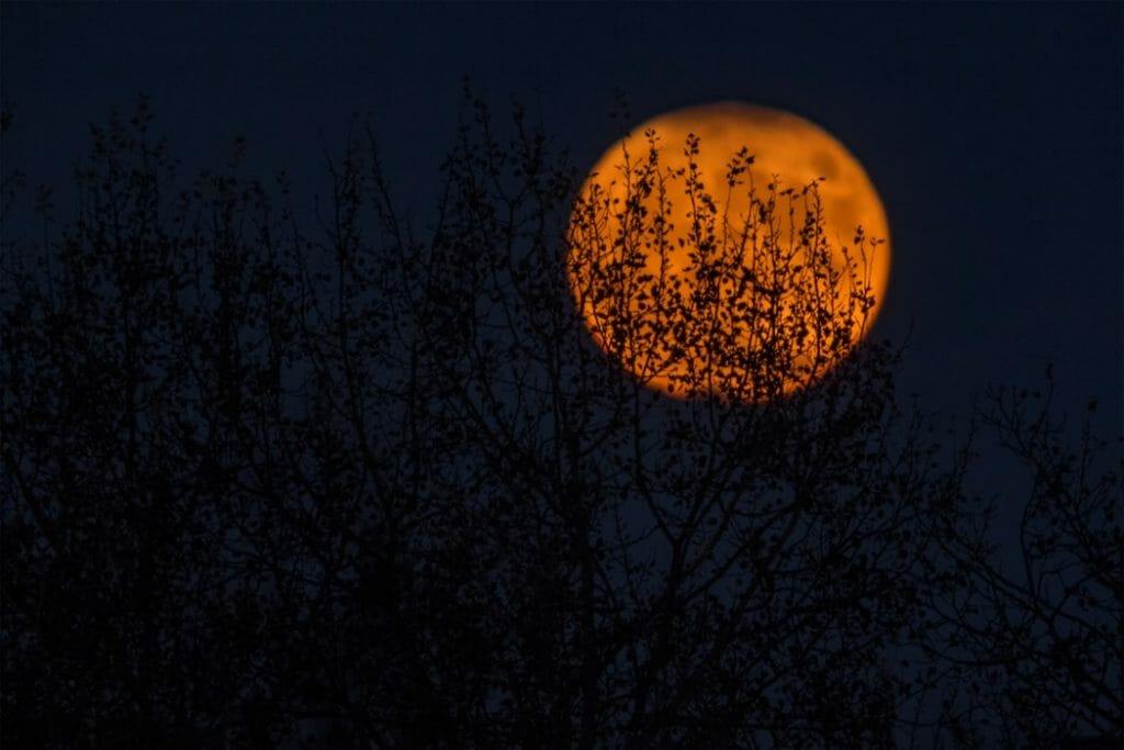 ksiezyc las halloween