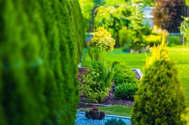 ogród podlewanie