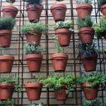 Jakie donice ogrodowe wybrać?