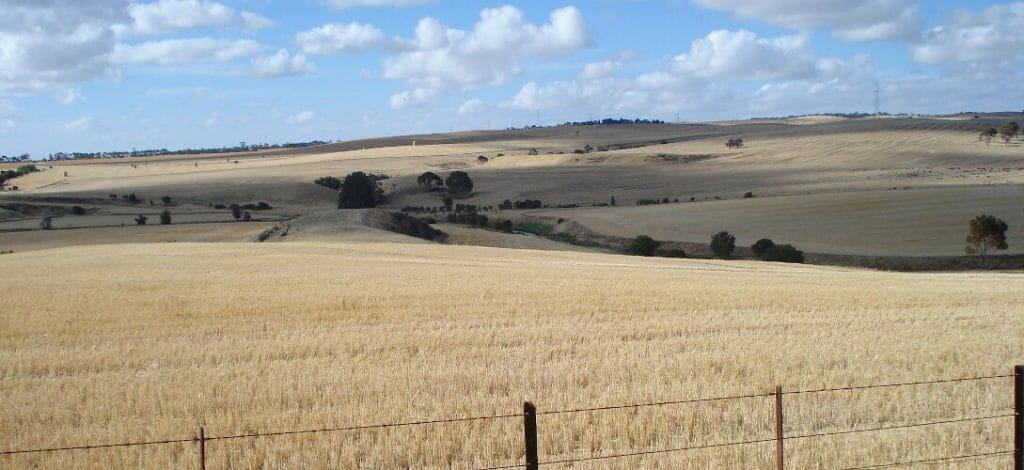 Działka rolna, zboże