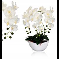 Biały i fioletowy storczyk