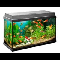 Małe akwarium 25 l
